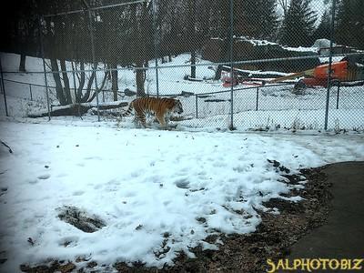 https://salphotobiz.smugmug.com/Zoos/Minnesota-Zoo/i-P9RMQjM/A