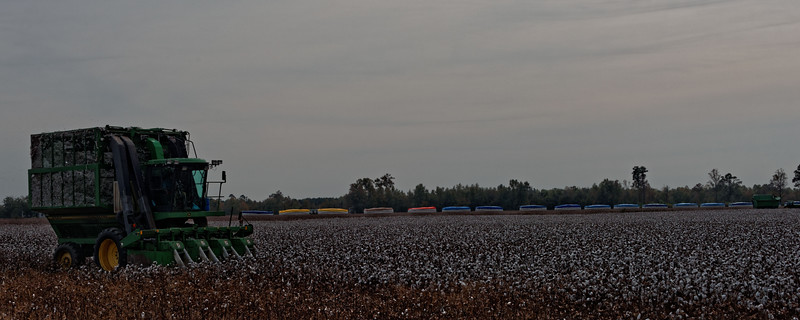 Cotton Harvesting near Hobgood in Halifax County.  Modules of picked cotton in the background.  One module = about 14 bales.  Can produce 24,000 t-shirts.