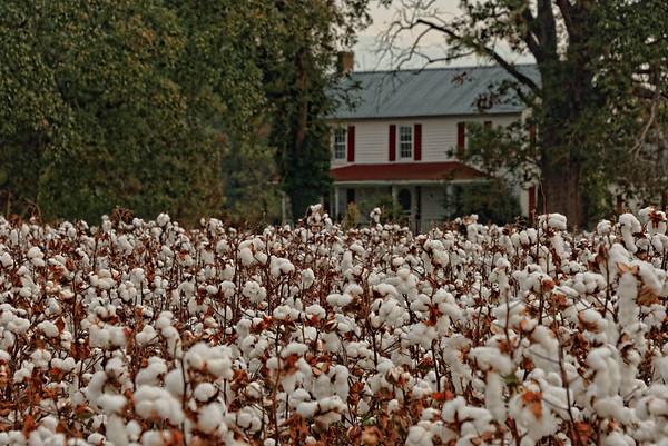Cotton Country - NE North Carolina
