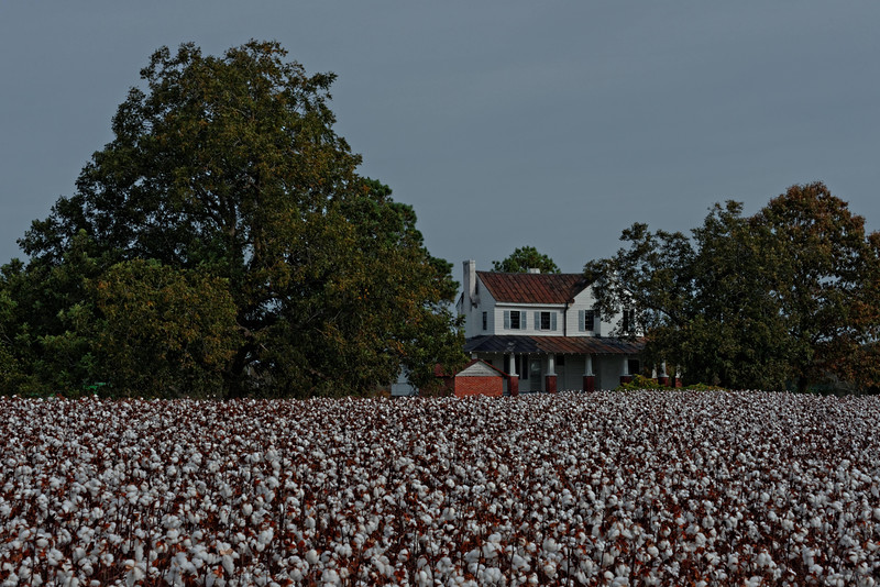 House and Cotton Field, Hwy 258 at Mullin Road