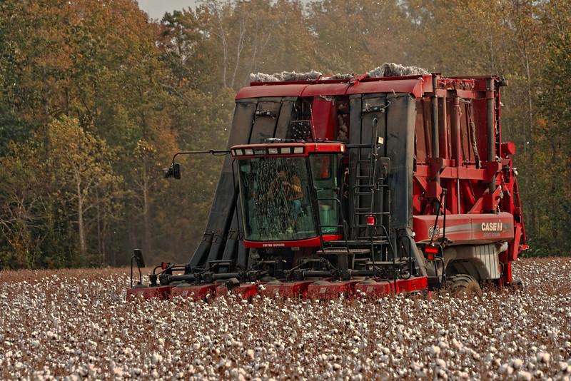 Harvesting on Hwy 32, Chowan County
