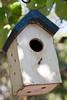 A bird-house hangs in the balance..