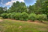 Row of Blueberry bushes (8)