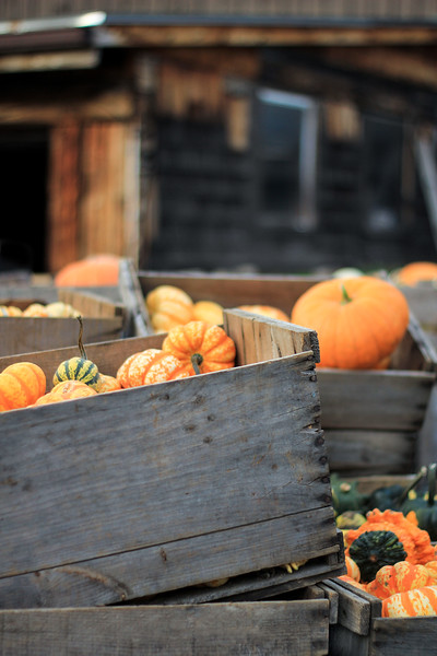 Small Crates of Pumpkins