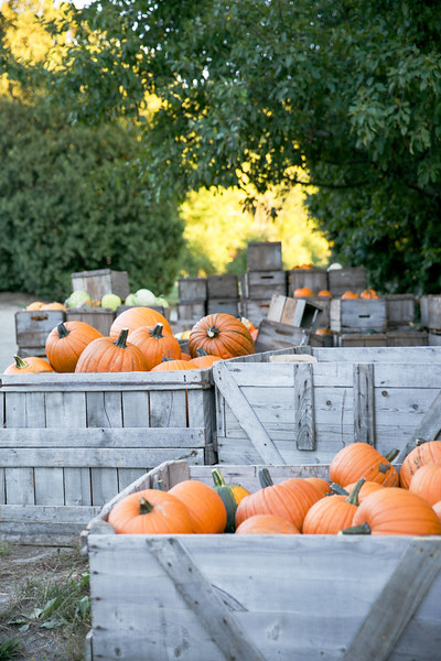 Large Crates of Pumpkins
