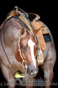 cowboy web-3687