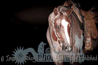 cowboy web-3675