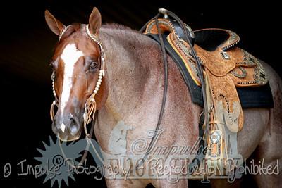 cowboy web-3647