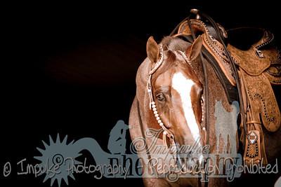 cowboy web-3677
