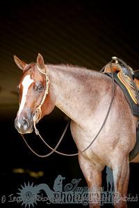 cowboy web-3655