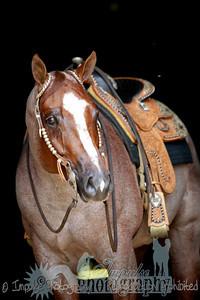 cowboy web-3695