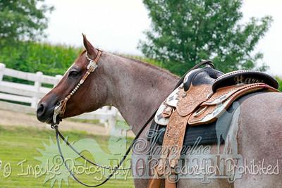 cowboy web-3553
