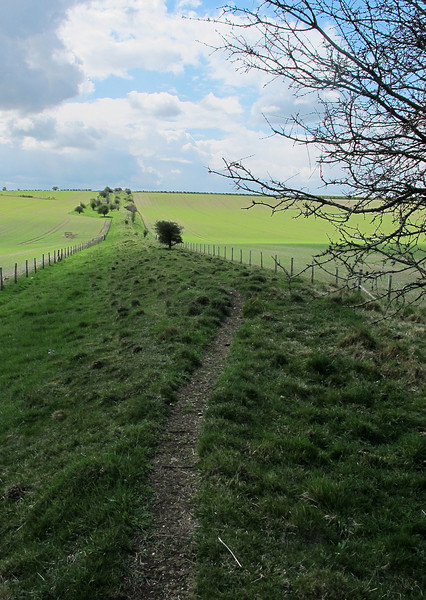 Ackling Dyke looking South West, a section of intact Roman Road which stretches for about 3 miles as straight as an arrow.