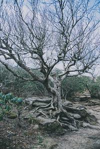 Craggy Gardens_-10