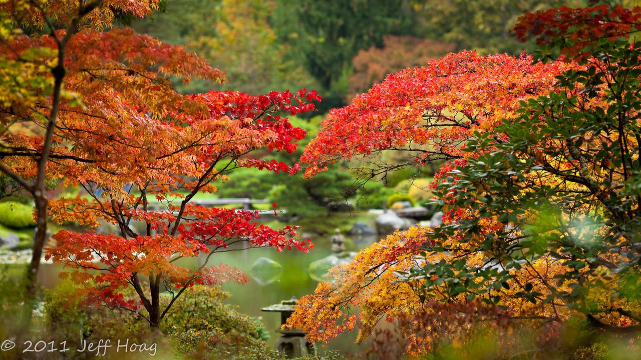 Japanese Garden - Seattle Arboretum