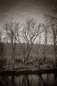 Trees along the Kokosing River in Knox County. (sepiatone)