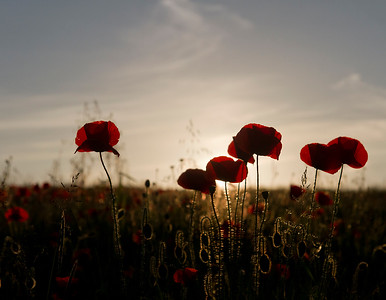 For those who gave everything 100 years ago.  We will remember them.