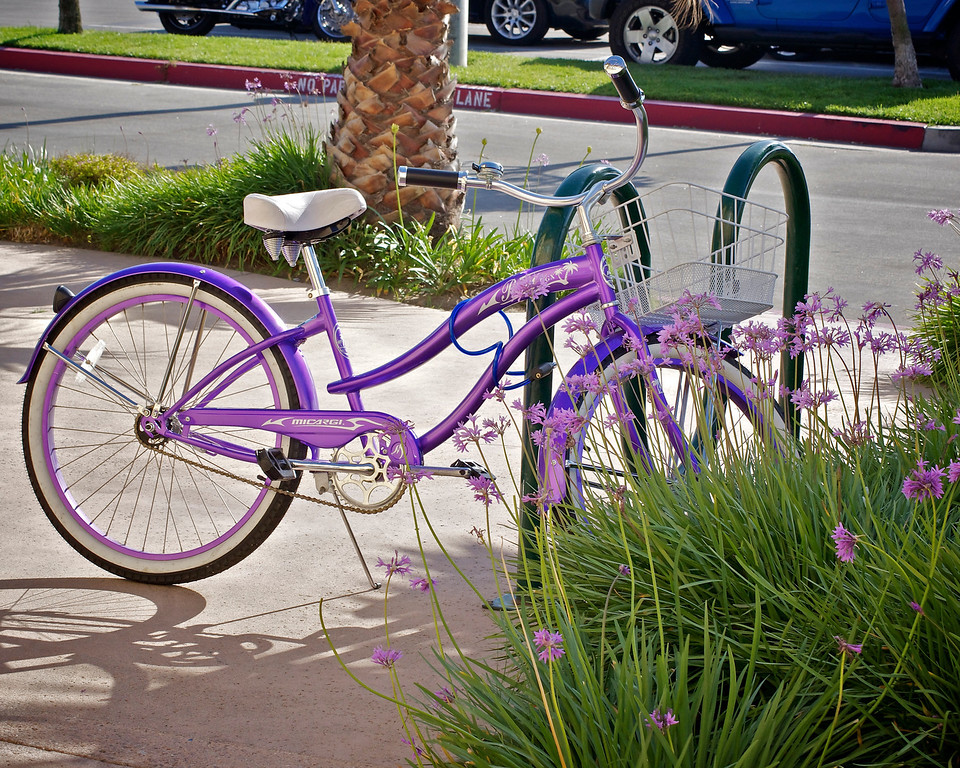 While strolling along the harbor I encountered this scene of a bike parked next to similarly colored flowers.