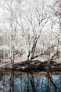 Reflections of trees on the Kokosing River in Knox County along the Kokosing Gap Trail.
