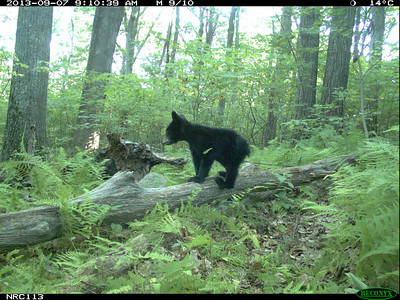 Critter Cam Pictures 10/23/2013