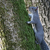 One of our resident squirrels.