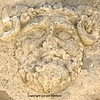 the head of jupiter with ram's horns. Ancient roman sculpture in the forum of Zadar in Croatia