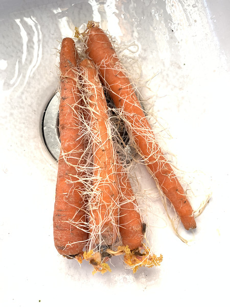 Maybe these carrots have been in their bag too long?