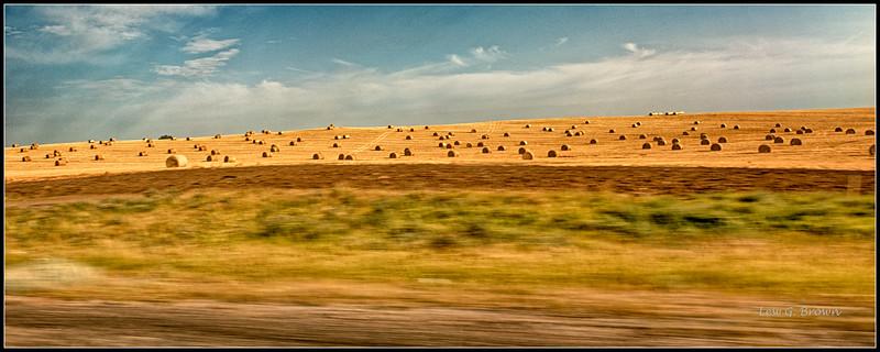 Hay Field, taken from moving truck.