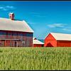 Barns near Polson, Montana