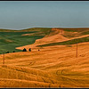 Rolling Hills - Palouse