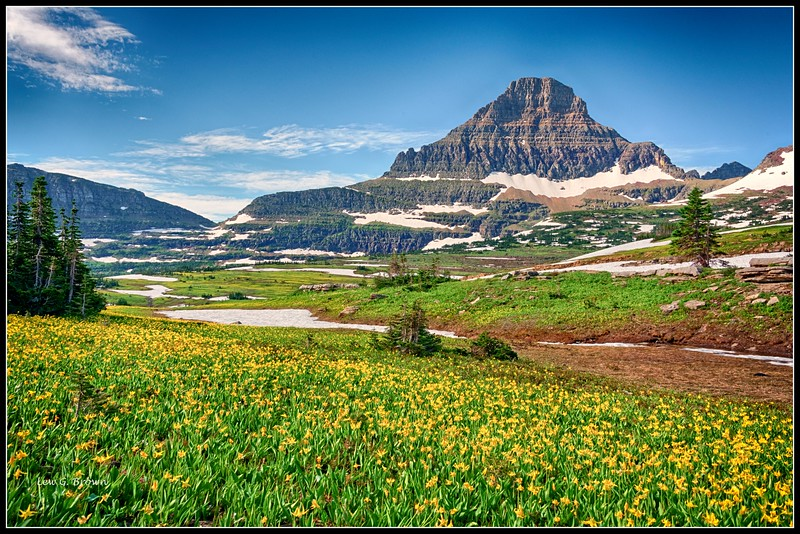 Reynolds Mountain.  Glacier Lilies blooming in foreground.