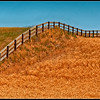 """Good Fences Make Good Neighbors.""  Palouse Fence."