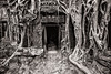 Ta Prohm Temple Entrance, Siem Reap, Cambodia