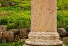 Column and Flowers, Roman Ruins of Jerash, Jordan