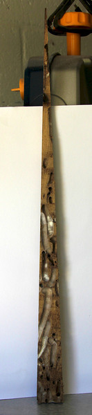 driftwood ray -  interior 004