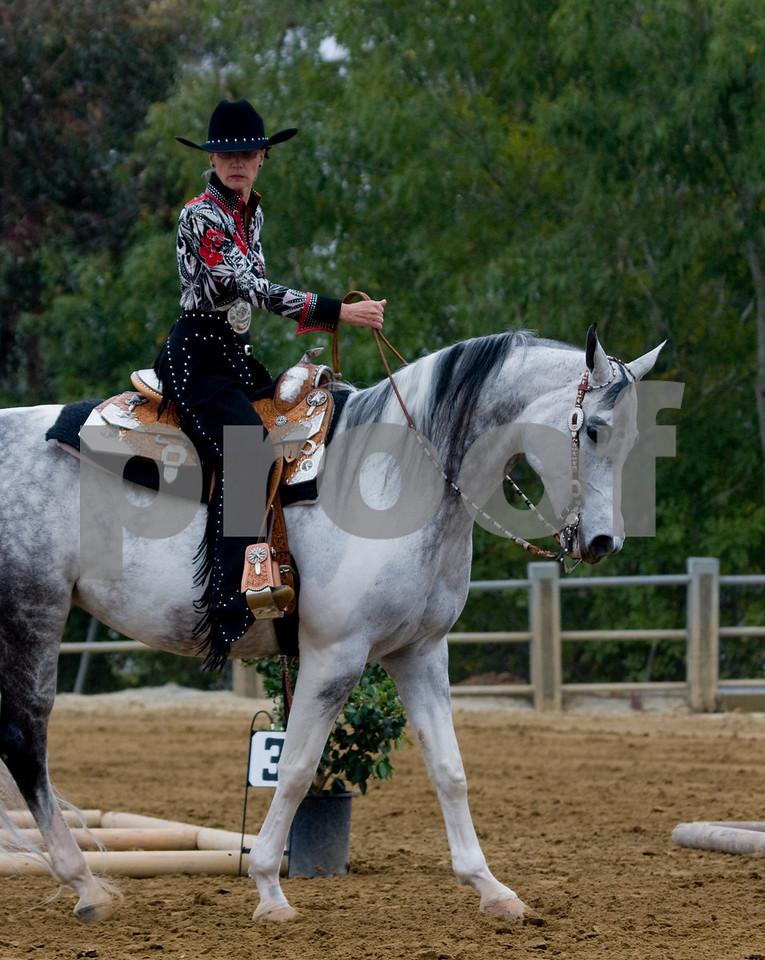 I just loved watching this horse..huge bone...elegant..