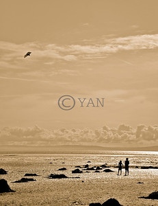 Kite in Brean