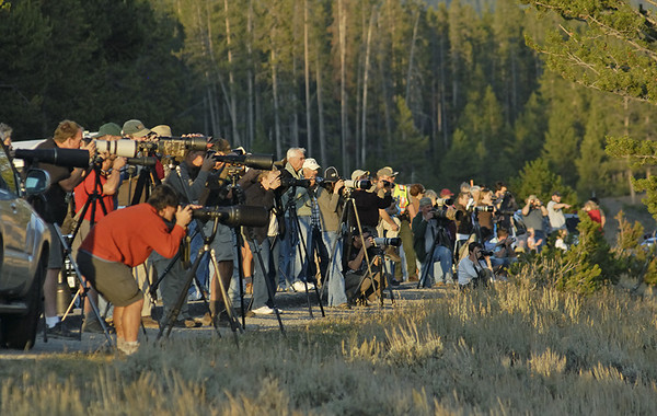 PHOTOGRAPHERS PHOTOGRAPHING A LARGE BULL ELK ALONG THE MADISON RVER, YELLOWSTONE N.P., WYOMING