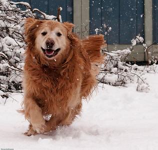 Murphy likes the snow