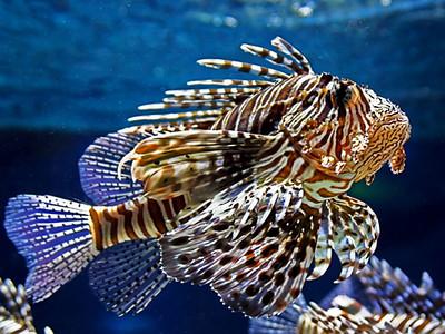 Photo of the beautiful motley fish in the aquarium