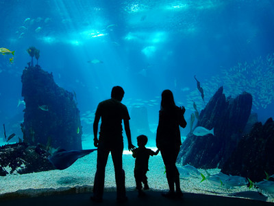 Underwater family. Silhouettes of young family of three enjoying views of underwater life. Family having free time in Oceanarium., Underwater family. Silhouettes of young family of three enjoying views of underwater life. Family having free time in Oceanarium.