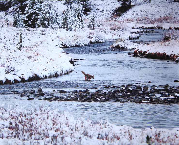 20NOV2011<br /> <br /> First snow, Yellowstone crossing......