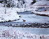 20NOV2011  First snow, Yellowstone crossing......