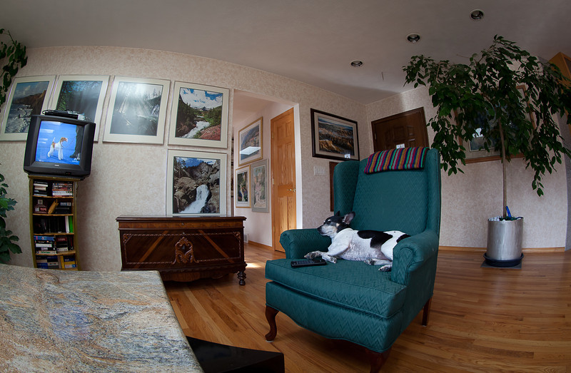 23NOV2012<br /> <br /> Sleepy Sherman<br /> <br />  <br /> Tryptophan got me.....<br /> <br /> My Wire Fox Terrier blood buddy got best in show at the National Dog Show yesterday....<br /> <br /> Ironic I slept through it.....<br /> <br /> Since so many have asked.....we just got through playing a game of spot check (he has lots)....from which he gets pretty crazy running around, thanks  for asking!
