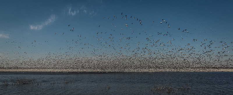 20FEB2012<br /> <br /> Lift Off....<br /> <br /> Single shot Taken at Squaw Creek National Wildlife Refuge.....