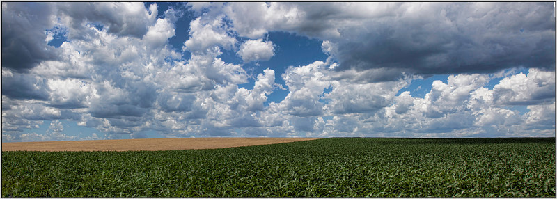 Today the sky is filled with mountains of puffy clouds against a deep blue background. This corn field is right next to a wheat field just down the road from where I live. The wheat fields are my favorite. Hope you can see the beauty in this as I do. 6.28.13