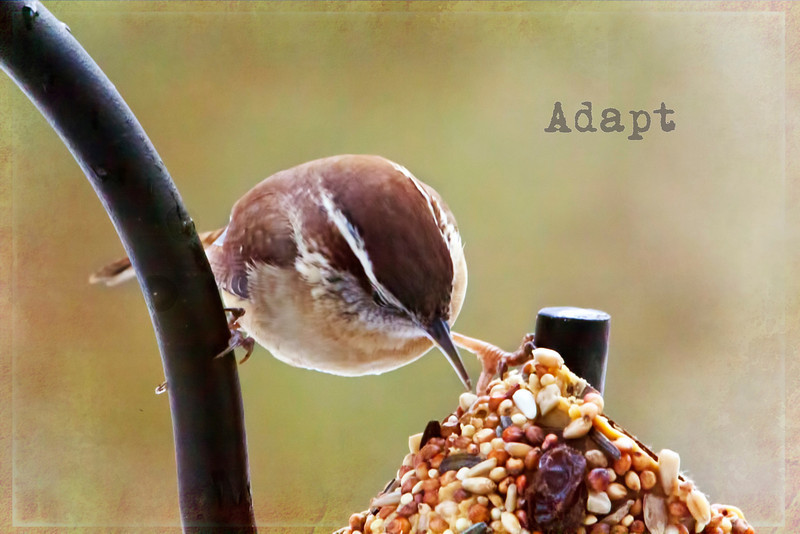 This little guy was practically doing the splits to get to a little treat.  I took a toilet paper roll and covered it with crunchy peanut butter and rolled it in bird seed and voile a quickie bird treat. They love it. 6.4.13