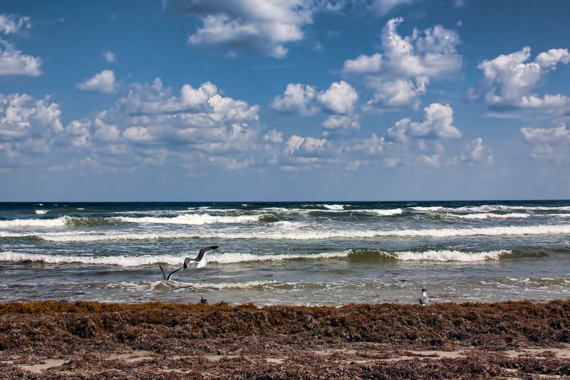 I am really scraping the bottom of the barrel to find a new daily. Where is the spring weather??? This is a shot from South Padre Island from Spring 2012. Sure wish I was there.