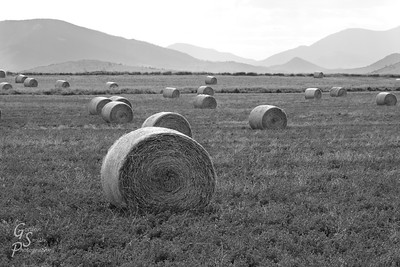 Hayfield, Hay Rolls and Mountains Black and white shot of a beautiful farm scene