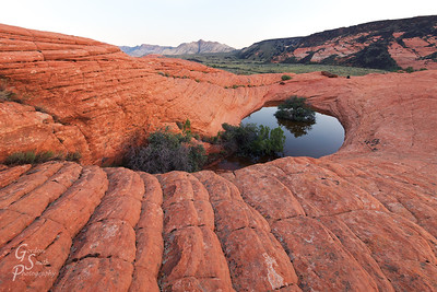 Sunrise without Clouds in Snow Canyon state park.  This small pool and vegetation set amid the sandstone formed a beautiful pocket of life